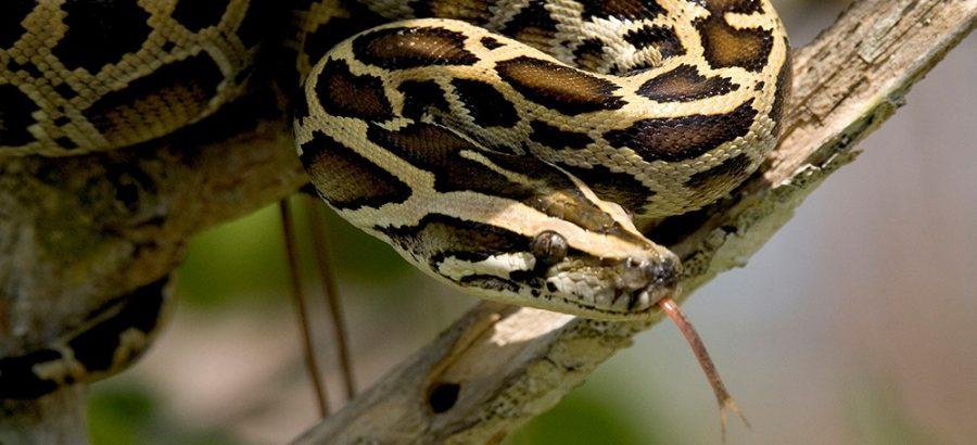 Coding students wrestle python